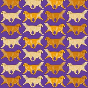 Trotting Golden Retriever border purple