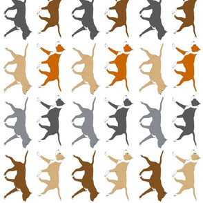 Trotting American Staffordshire Terriers large border - vertical