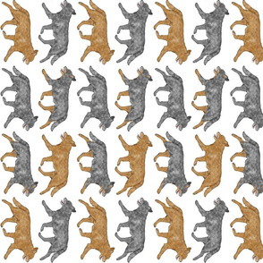 Trotting Australian cattle dog border A - vertical
