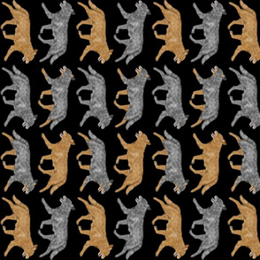 Trotting Australian cattle dog border B - vertical