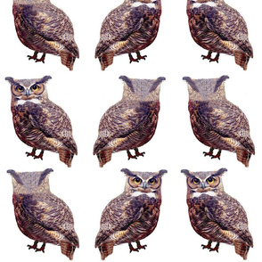 Little Tuffed Ear Owls