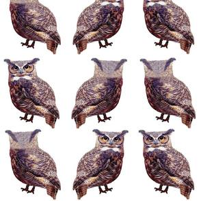 Little Tuffed Ear Owls