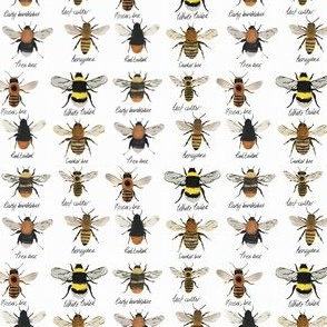 I'm going on a bee hunt // bumble bee and honey bees
