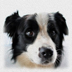 boarder collie - dog - painted