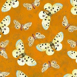 moths-brightorange