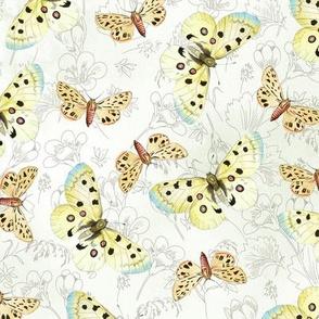 moths-white