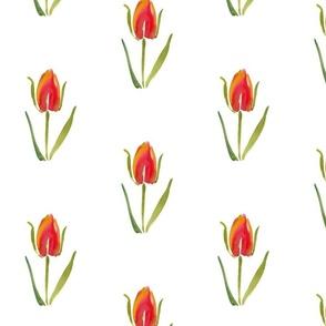 cestlaviv_tulip_no2