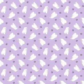 Tiny Maltese - purple