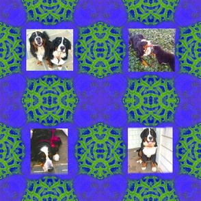 Susan's Bernese Mountain Dogs