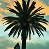 6448528-palmtree1-by-maxmuzik