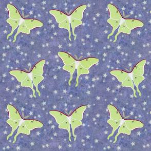 luna moths on violet