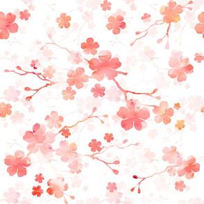 Peach pink cherry blossom on white