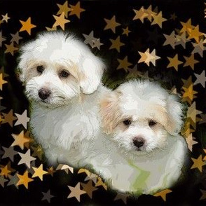 cotton_de_tulear_puppies