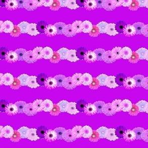 Daisy Chain /Purple