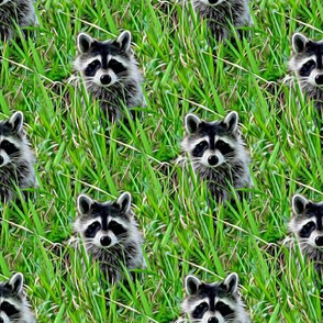 raccoons - painting effect
