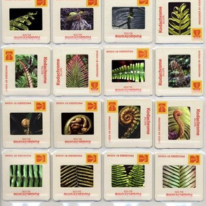 slide sheet - ferns & fronds