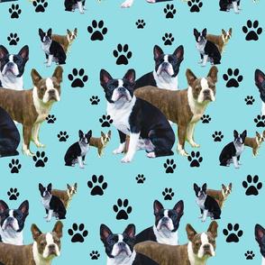 Seamless boston Terrier design