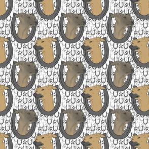 Italian Greyhound horseshoe portraits B