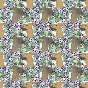 Floral Italian Greyhound portraits B