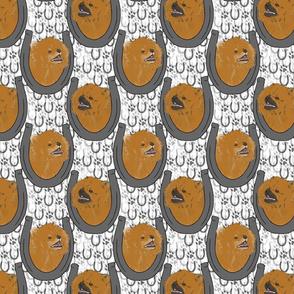 Pomeranian horseshoe portraits A