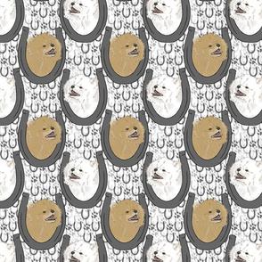 Pomeranian horseshoe portraits B