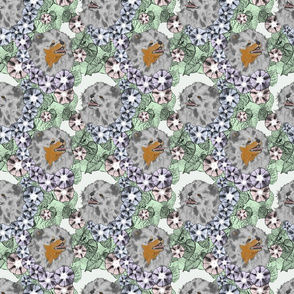 Floral Pomeranian portraits E