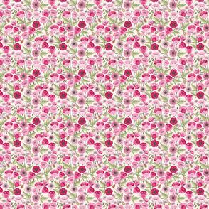 poppy_field_pink_S