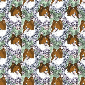 Floral Rough Collie portraits