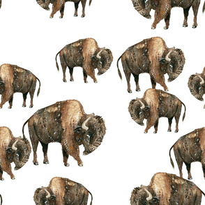 Bison Herd - Larger scale