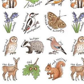 British Woodland Wildlife