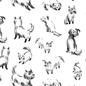 Mini terriers