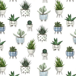 funny home plants
