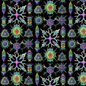 Ernst Haeckel Spumellaria Radiolarians