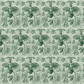Haeckel Filicinae Ferns