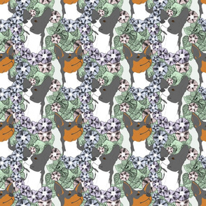 Floral Rat terrier portraits B
