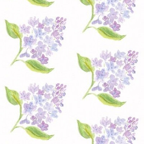 Lilac Flowers Watercolor