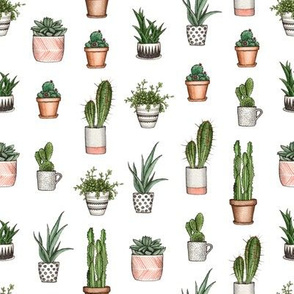 watercolor home plants. succulents and cactus