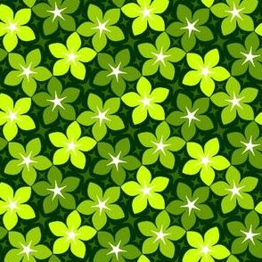 06533943 : S43CVflora : verdant