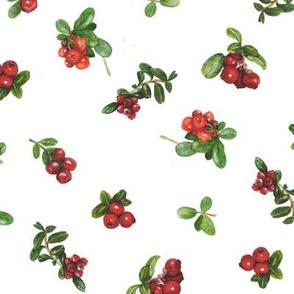 cranberries_white background