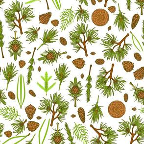 Pines 4