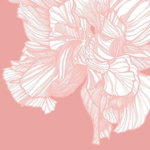BW_HIBISCUS_Pink_on_Pink