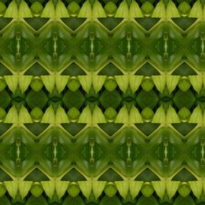 Ethnic leaf