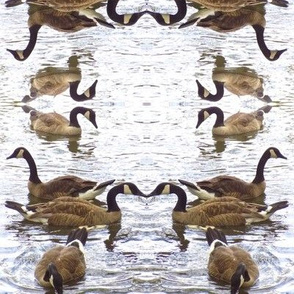 Chicago_Geese_1