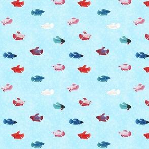 betta splendens fish - colorful females