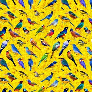 Brilliant Birds 2 (yellow bg)