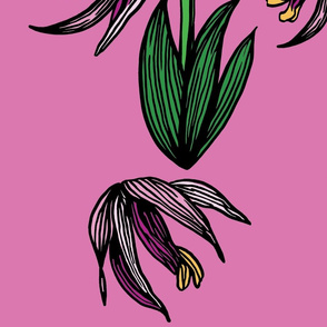 ORCHID_HEAVY_LINES_PATTERN_PINK_BKGD