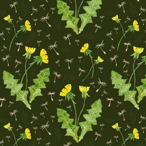 Dandelions on dark background
