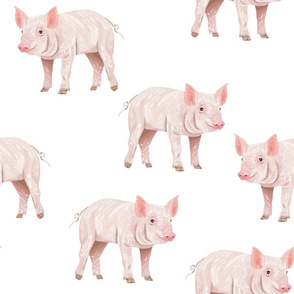 Piggies - Larger Scale