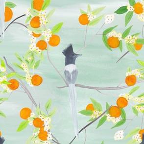 Orange Blossom Aviary