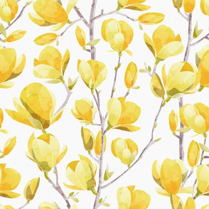 Normal scale // Yellow Magnolia Spring Bloom 2 // white background
